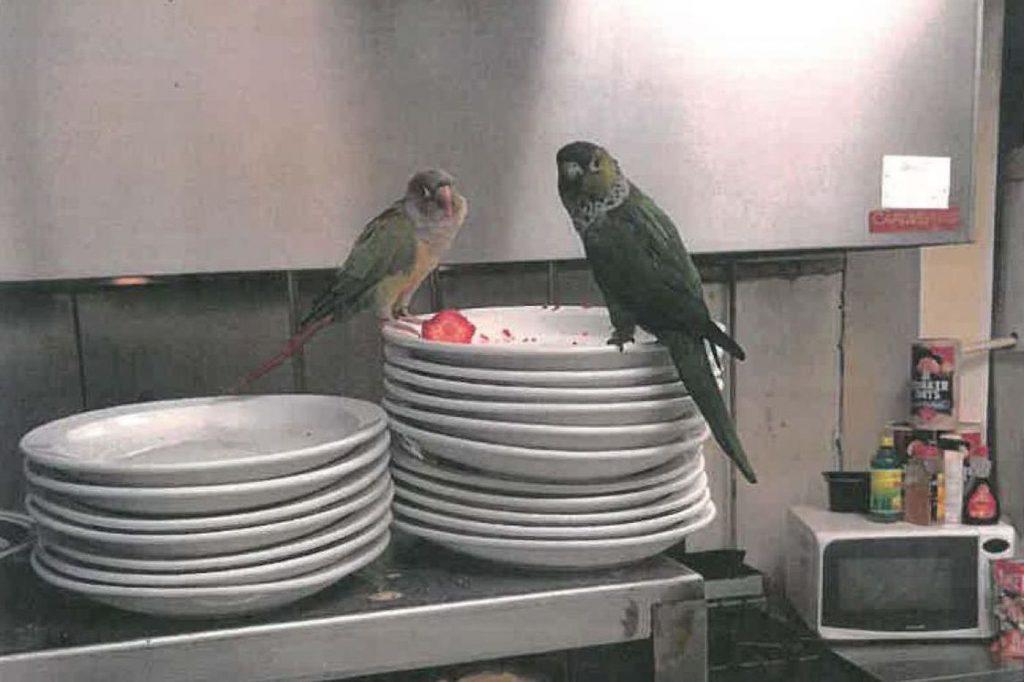 bird in restaurant